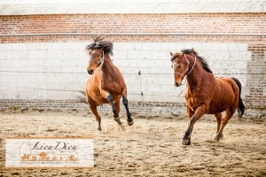 stage poney lieu dieu
