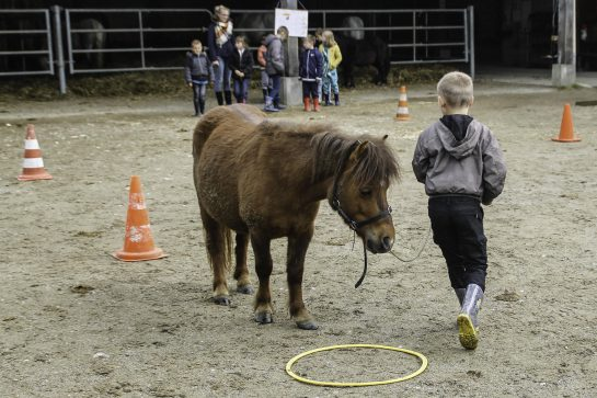 stage équitation somme