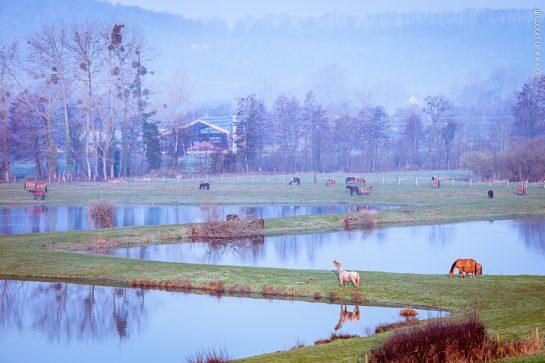 cadre idyllique pour vacance à cheval