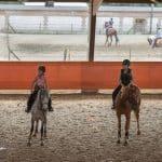 Faire connaissance avec son cheval
